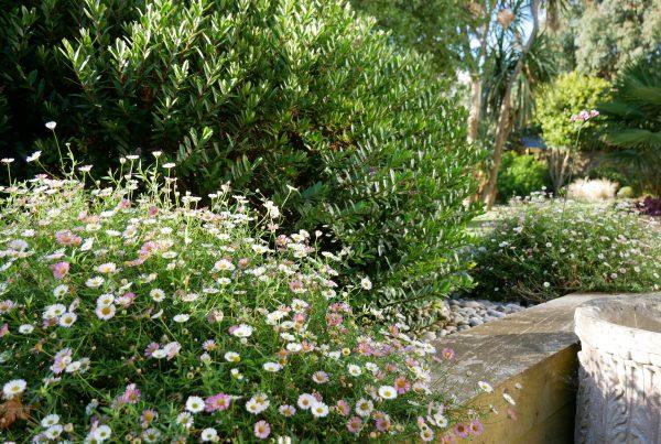 Specialist Gardening Services in Devon and Somerset