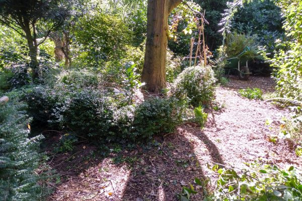 Informal woodland