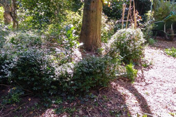 creative box pruning